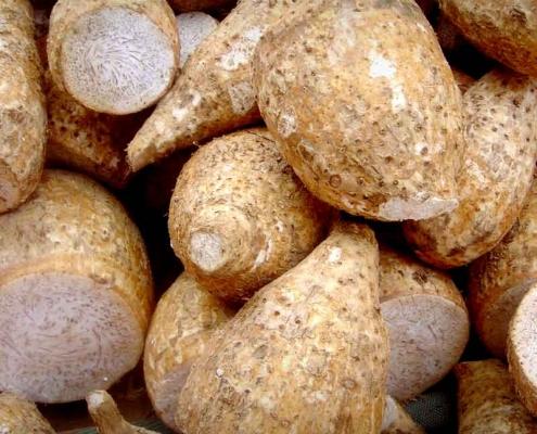 Cocoyam